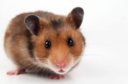 A Hamster at Skyzone